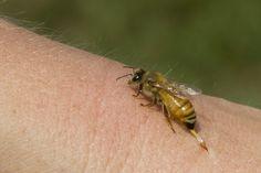 wordpress bee